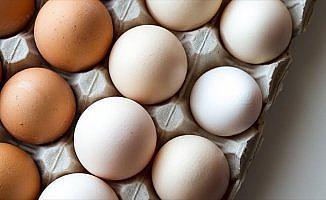 Ejderha tavuğu yumurtalarını yurda sokmak isterken yakalandılar