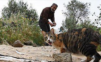 Bodrum'un kedilerini 30 yıldır 'Ali Baba' besliyor