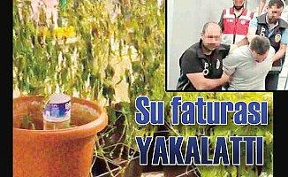 Evinde esrar yetiştiren adamı yüksek su faturası yakalattı