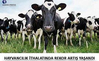 Hayvancılık ithalatında rekor artış