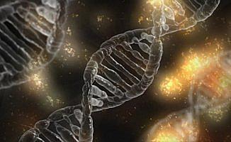 Kanserin yayılmasında kilit öneme sahip 11 gen tespit edildi