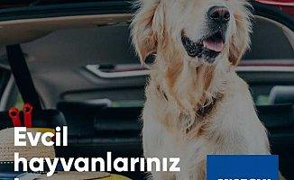 Evcil Hayvanlar için Kasko sigortası mümkün mü?