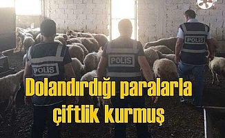 86 kişiyi dolandırdı, çiftlik kurdu; Polis bile şaşkına döndü