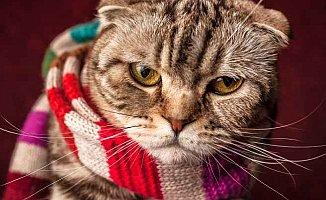 Soğuk havalarda, psikolog talepleri artıyor