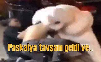 Paskalya tavşanı şiddet gören kadına yardım etti