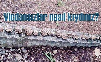 Savunmasız 23 kaplumbağayı tek tek öldürmüşler