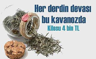 Beyaz Çay kilosu 4 bin lirayı geçti