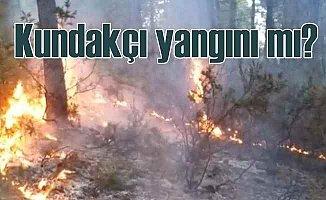 Sultanbeyli'de orman yangını kundakçı işi mi?