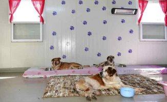 Beylikdüzü'nde 2 bin 244 sokak hayvanı tedavi edildi