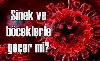 Koronavirüs sinek ve böcekle geçer mi?