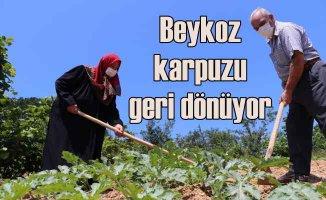 Beykoz Karpuzu lezzetiyle İstanbul'u saracak