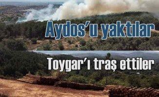 Beykoz Toygar Ormanı'nda neler oluyor | Pandemide gizemli kesim