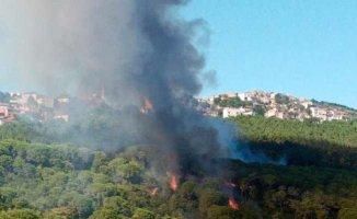 Maltepe'de çıkan orman yangını söndürüldü