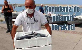 Karadeniz'de palamut bereketi | Ekim'de daha da artacak