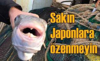 Balon balığı zehiri, siyanürden 200 kat daha güçlü