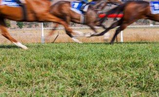 TJK, İzmir'deki yarışları erteledi