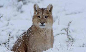 Belgesel | Vahşi Kış National Geographic WILD'da