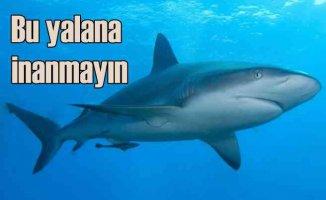Köpek balığı etinin şifalı olduğu yalanına inanmayın