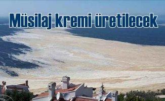 Deniz salyasından merhem üretilebilir | Müsilaj kremi