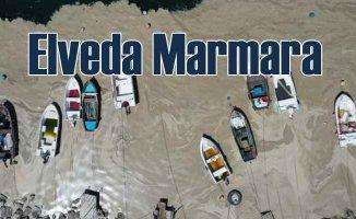 Marmara Denizi'ndeki çevresel yıkım, yeni salgınlara yol açabilir