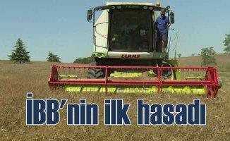 İBB boş duran arazilerde buğday hasadı yaptı