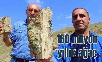 Erzurum'da 160 milyon yıllık keşif | İlk günkü gibi
