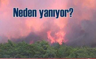 Ormanlar neden yanıyor?