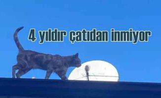 Çatıda yaşayan kediyi esnaf besliyor