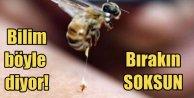 Arı sokması felç ve romatizmayı önlüyor