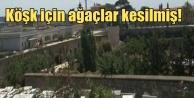 Asırlık çınarlar, Erdoğan için mi kesildi?