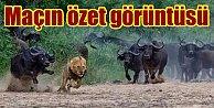 Aslan, Arena'da perişan oldu, Galatasaray 0,  Borussia Dortmund 4