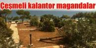 Çeşme Dalyan'da magandalar ağaçları kesti