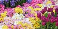 Çiçeklerin ömrü nasıl uzar? Çiçek ömrünü uzatmanın yolları