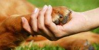 Evde hayvan beslemek kalp ve damar hastalığı riskini düşürüyor
