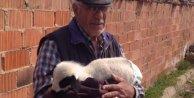 Evinde biberonla beslediği kuzusuna bebek bezi bağladı