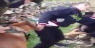 Filistinli çocuğun üzerine köpeği böyle saldırttılar