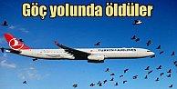 Hava alanında Göçmen kuş katliamı