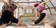 Isparta lavanta üretiminde gözünü zirveye dikti