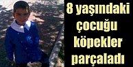 Kayseri Bünyanda feci ölüm, 8 yaşındaki çocuğu köpekler parçaladı