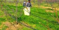 Kaz Dağları'nda 'Kinoa' yetiştiriliyor