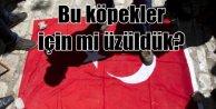 Kudüste ermeni köpekler Türk bayrağını çiğnedi