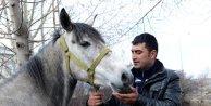 Rahvan atı ırkının korunması için damızlık üretime geçildi