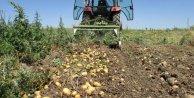 Sandıklıda patates hasadı sıkıntılı başladı