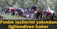Suriyeliler Fındık Hasadında Çalıştırılabilir