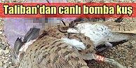Taliban, canlı bomba kuşla uçak düşürmeye kalktı