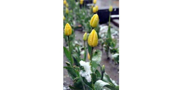 Van'da Nisan karı yol kapattı