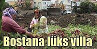Yedikule Bostanları talan ediliyor, Fatih Belediyesinden skandal proje