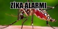 Zika virüsü alarmı; Sivrinekle gelen felaket
