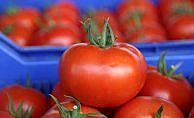 Rus heyet domates ihracatını görüşmeye geliyor