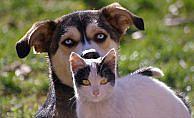 Kediler böbrek, köpekler kalpten şikayetçi